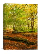 Padley Gorge, Canvas Print