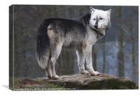 Wolf Tala, Canvas Print
