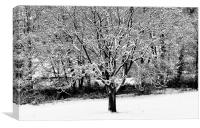 Snowy Tree by the River