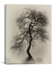 Crooked Tree in Silouette