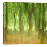 Summer Woods, Canvas Print