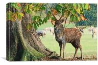 Stag and Tree, Canvas Print
