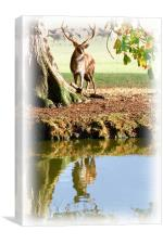 Stag and Water, Canvas Print