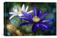 Anemone allure