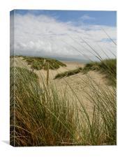 Sand Dunes, Porthmadog, Wales, Canvas Print