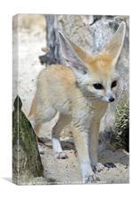 fennec fox, Canvas Print