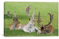 three deers, Canvas Print