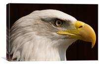 eagle close up, Canvas Print
