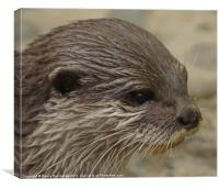 otter close up, Canvas Print