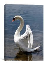 swan wings, Canvas Print