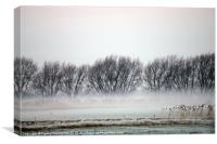 misty trees at nene washes, Canvas Print