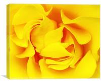 Sunset Rose, Canvas Print