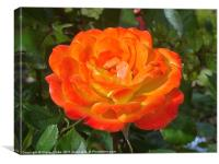 Orange Rose, Canvas Print
