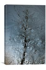 Reflections Of Winter, Canvas Print