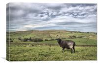 ba.ba. black. sheep ., Canvas Print