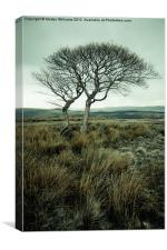 Two Trees, Peak District, Canvas Print