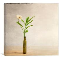 Chrysanthemum In A Bottle, Canvas Print
