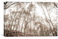 Suprise View Trees, Canvas Print