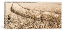 Wheat Field, Canvas Print