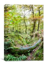Woodland, Padley Gorge, Derbyshire, Canvas Print