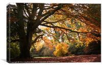 Autumn Beauty, Canvas Print