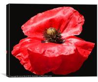 Remembrance Poppy, Canvas Print