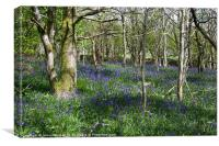 Bluebells at Llyn Cwellyn, Wales, Canvas Print