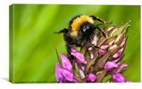 Dancing Bee, Canvas Print