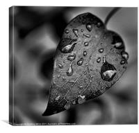 Crying in the Rain, Canvas Print
