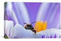 Spring Bee, Canvas Print