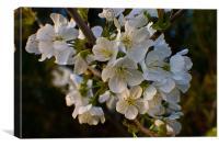 White Blossom Tree, Canvas Print