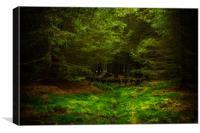 Enchantment, Canvas Print