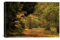 Autumn Pathway, Canvas Print