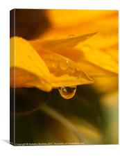 Sunflower Water Drop, Canvas Print
