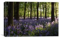 Bluebells, Canvas Print