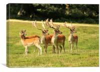 Fallow Deer, Canvas Print