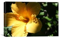 Yellow flower with dramatic shadows, Canvas Print