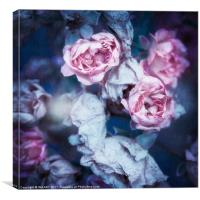 Faded Roses, Canvas Print