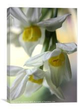 Spring Drops, Canvas Print