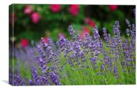 Smelling Sweet Lavender, Canvas Print