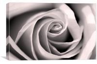 Petal Swirl, Canvas Print