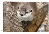 Short Clawed Otter, Canvas Print
