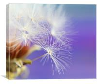 Make a wish, Canvas Print