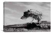 Windswept, Canvas Print