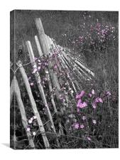 Fallen Fence, Canvas Print