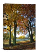 Autumn Parkland, Canvas Print