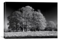 Moulton Grange in Infra Red, Canvas Print