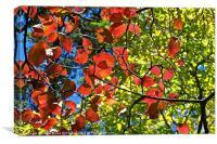 Bright Autumn Colours, Canvas Print