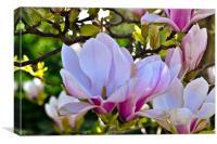 Magnolia in bud, Canvas Print