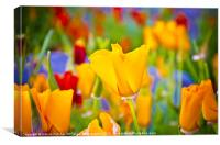Bright Flower, Canvas Print